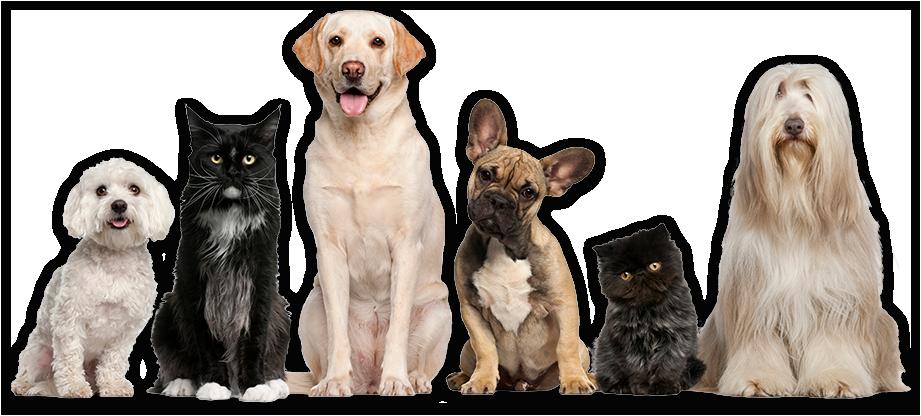 home-pets-4